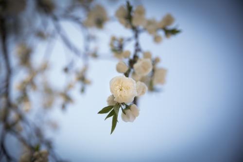 spring-flowers-765139_1920